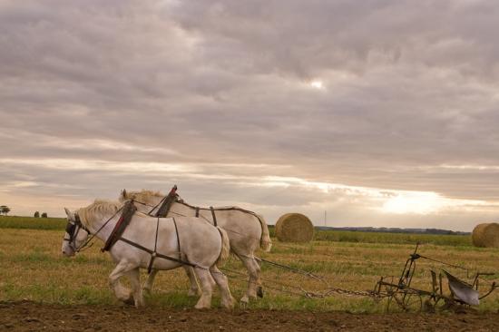chevaux-de-trait.jpg
