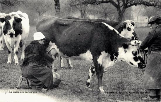 traite-des-vaches.jpg